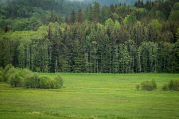 Photo sur Toile Kaki Las w okolicach Witkowa.