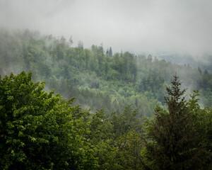 Zamglony górski las w okolicy miejscowości Miłków