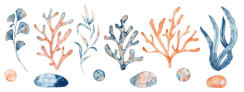 Watercolor set of isolated objects drawing blue and pink algae and corals