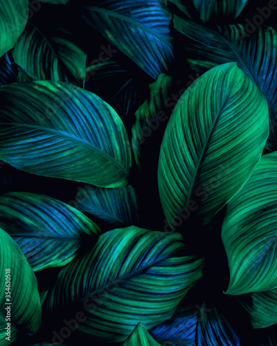 Wall mural closeup nature view of green leaf background, dark wallpaper concept.