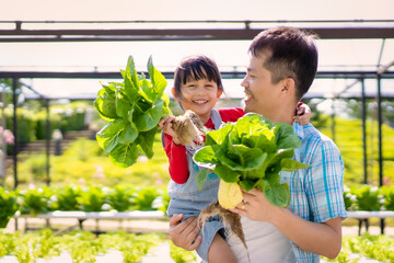 Fototapeta Asian father and daughter are helping together to collect the fresh hydroponic vegetable in the farm, concept gardening and kid education of household agricultural in family life style. obraz