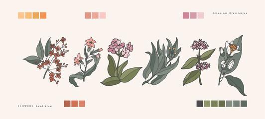 Vector illustration botanical herbs - vintage engraved style. Sandalwood, tobacco, verbena, eucalyptus, patchouli and citrus bergamia.