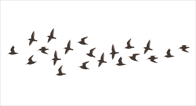 Vector silhouette a flock of small flying birds
