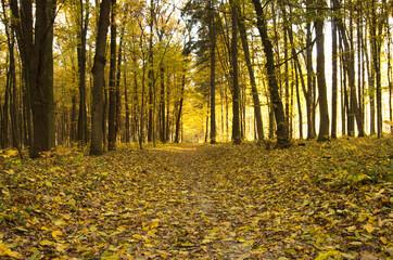Wall Mural - Beautiful golden autumn landscape