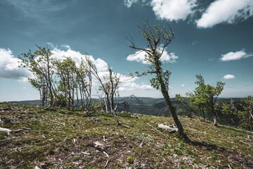 Des arbres penchés par le vent et brûlés par la sécheresse