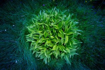 une grosse plante verte et ronde  entourée d'herbe et de petites fleurs