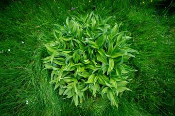 une grosse plante verte et ronde au milieu d'herbes hautes