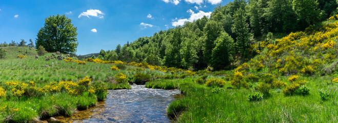 Panorama sur un paysage de montagne avec des sapins et une rivière