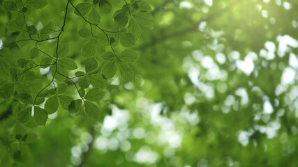 Wall Mural - Background with green leaves on the wind and space for text. Green summer abstract background. 4K
