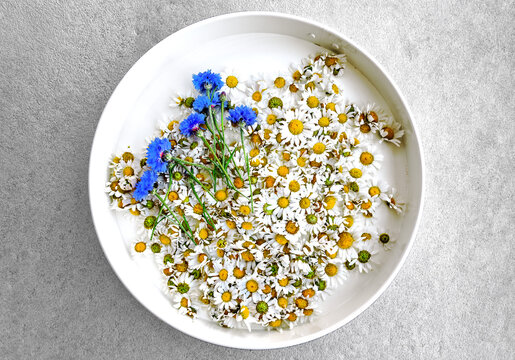 Daisy and bluet flowers in round tray