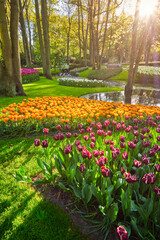 Foto op Plexiglas Groene Keukenhof flower garden with blooming tulip flowerbed - one of the world's largest flower gardens on sunset. Lisse, the Netherlands.