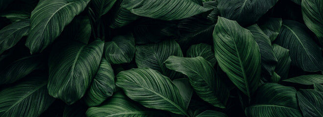 Foto op Canvas Natuur abstract green leaf texture, nature background, tropical leaf