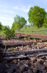 Transportation / Railway: Small birch growing between the railway sleepers of an old and no longer used siding at the edge of an electrified double-track railway line in Central Germany
