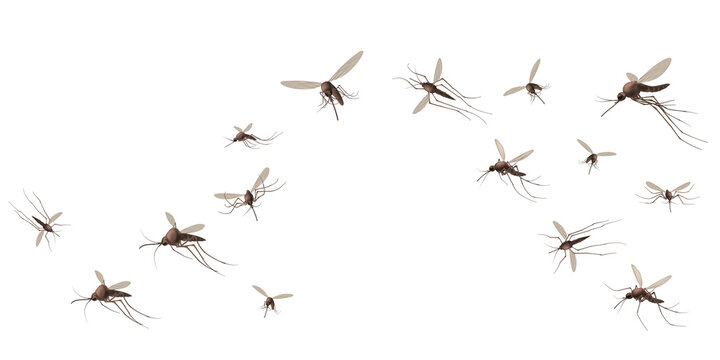 Flying mosquito insects. Gnat and pest, spreading viruses and diseases, gnats flock, repellent or spray promo poster vector concept. Malaria mosquito buzzing, infectious parasitic spreading