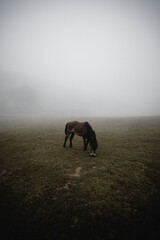 Horse grazing in field on foggy day
