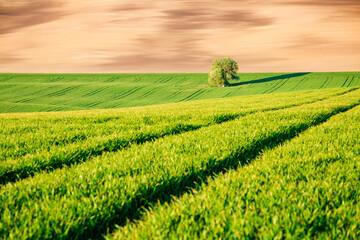 壁紙(ウォールミューラル) - Perfect sunlight on the wavy fields of agricultural area. Location place of South Moravia region, Czech Republic, Europe.
