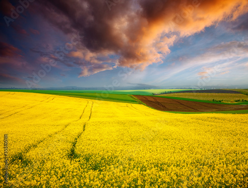 Wall mural Dramatic summer meadow with yellow rapeseed at sundown.