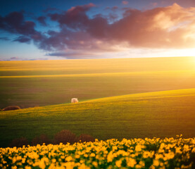 Wall Mural - Picturesque view on of sunlit wavy fields of agricultural area in morning. Location place of South Moravia region, Czech Republic.