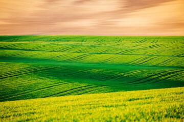 壁紙(ウォールミューラル) - Idyllic sunlight on the wavy fields. Location place of South Moravia region, Czech Republic, Europe.