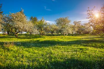 壁紙(ウォールミューラル) - Green meadow and ornamental garden in breathtaking sunny day.