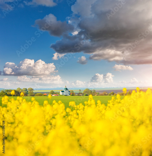 Wall mural Yellow canola field and and fluffy white clouds on a sunny day.