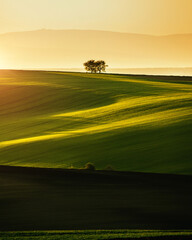 Wall Mural - Peaceful view on of sunlit wavy fields of agricultural area. Location place of South Moravia region, Czech Republic.