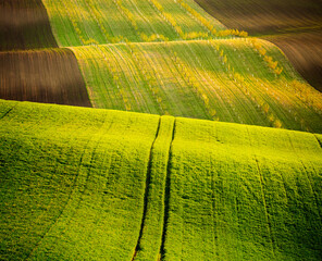 Wall Mural - Fantastic view on of sunlit wavy fields of agricultural area. Location place of South Moravia region, Czech Republic.