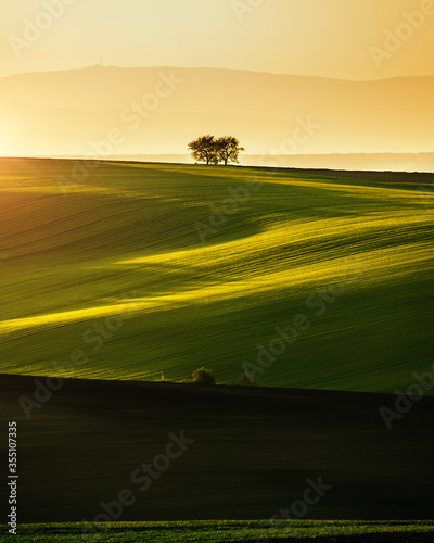 Wall mural Peaceful view on of sunlit wavy fields of agricultural area. Location place of South Moravia region, Czech Republic.