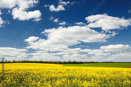 Wall mural Yellow canola field and and fluffy white clouds on a sunny day. Picturesque rural area in springtime.