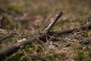 Fototapeta w moim magicznym lesie  obraz