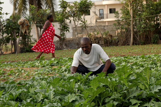 Togbui Doevi Jean Dorllayi II, Chief of Doevikope, 63, works on his kitchen garden next to his temporary home in Baguida