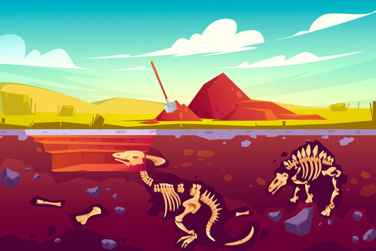 Fossil dinosaurs excavation, paleontology and archeology works. Vector cartoon illustration of landscape with pill of soil, shovel, buried skeletons of prehistoric reptiles underground
