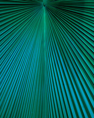 Wall Mural - closeup nature view of palm leaf background, dark green wallpaper concept.