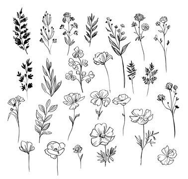Set of floral and plant elements. Vector sketch. Linear floral elements for design.