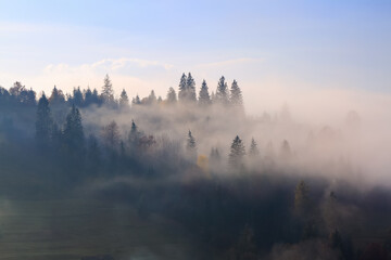 Magic autumn landscape. Forest of the pine trees. High mountains. Dense fog with beautiful light covered the valley. A place to relax. Free space for text.