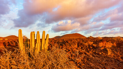Desert area in the south of Tenerife at sunset