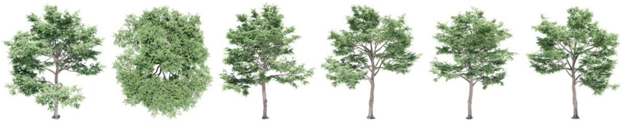 Fototapeten Olivgrun Set or collection of green elm trees isolated on white background. Concept or conceptual 3d illustration for nature, ecology and conservation, strength and endurance, force and life