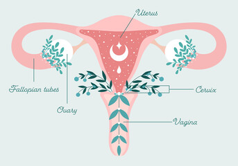Healthy female reproductive system - Uterus and Ovaries in Flowers. Blooming womb with crescent. Floral Anatomy Scheme - Gynecology Theme. Patient-friendly infographics with text. Symbol of femininity