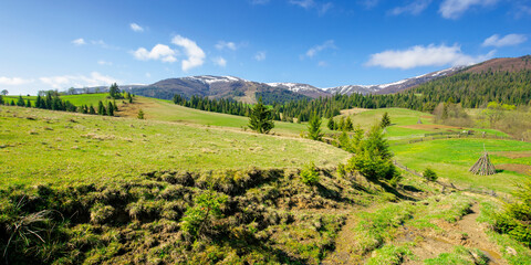 Wall Mural - rural landscape in mountains. beautiful green summer scenery. trees and fields on the rolling hills. carpathian nature on a sunny day. ridge with snow in the distance
