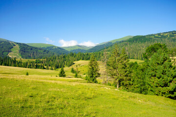 Wall Mural - countryside landscape in summer time. trees on the fields and hills covered in green grass rolling through scenery in morning light. mountain ridge in the distance