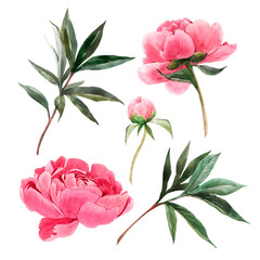 Beautiful set with watercolor gentle pink peony flowers. Stock illustration.