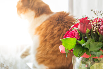 Rose bouquet and ginger cat in distance