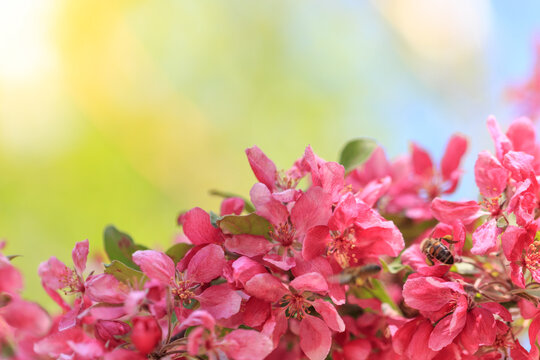 Pink flowers on a branch of a tree with green and blue background