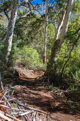 Papiers peints Noir Thredo Valley Track in New South Wales Australia