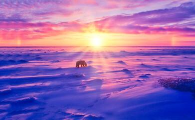 Fototapeten Eisbar Sunset in Canadian Arctic ith polar bear