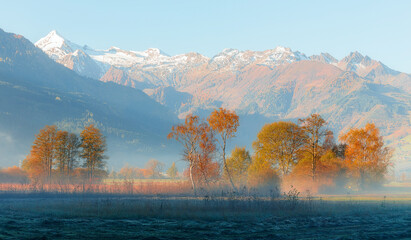 Fotomurales - Wonderful misty morning with colorful trees at the mountain valley. Majestic mountain range on background. Fantastic Autumn landscape with fog under sunlight. Beautiful Alpine Scenery.