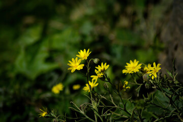 A wildflower from Taif