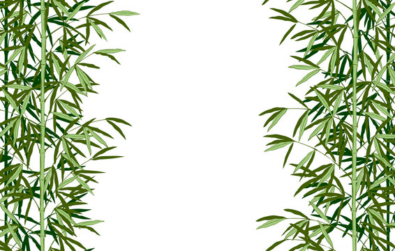 Vertical seamless pattern frame and background of green bamboo stem with leaves. Vintage color engraving stylized drawing. Vector illustration