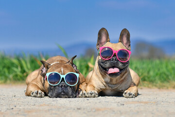 Adorable cute happy French Bulldog dogs wearing sunglasses in summer in front of meadow and blue...