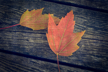 Red Autumn Maple Leaves on Wood. Vintage Texture Background.